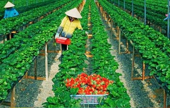 Đơn hàng nông nghiệp phù hợp với nữ giới nhanh nhẹn, có sức khỏe tốt
